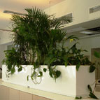 The care of plants in the office Finpro Trade Center at the General konulstve Finland